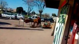 VIDEO: Un toro se escapó del matadero y atacó a la empleada de una parrilla
