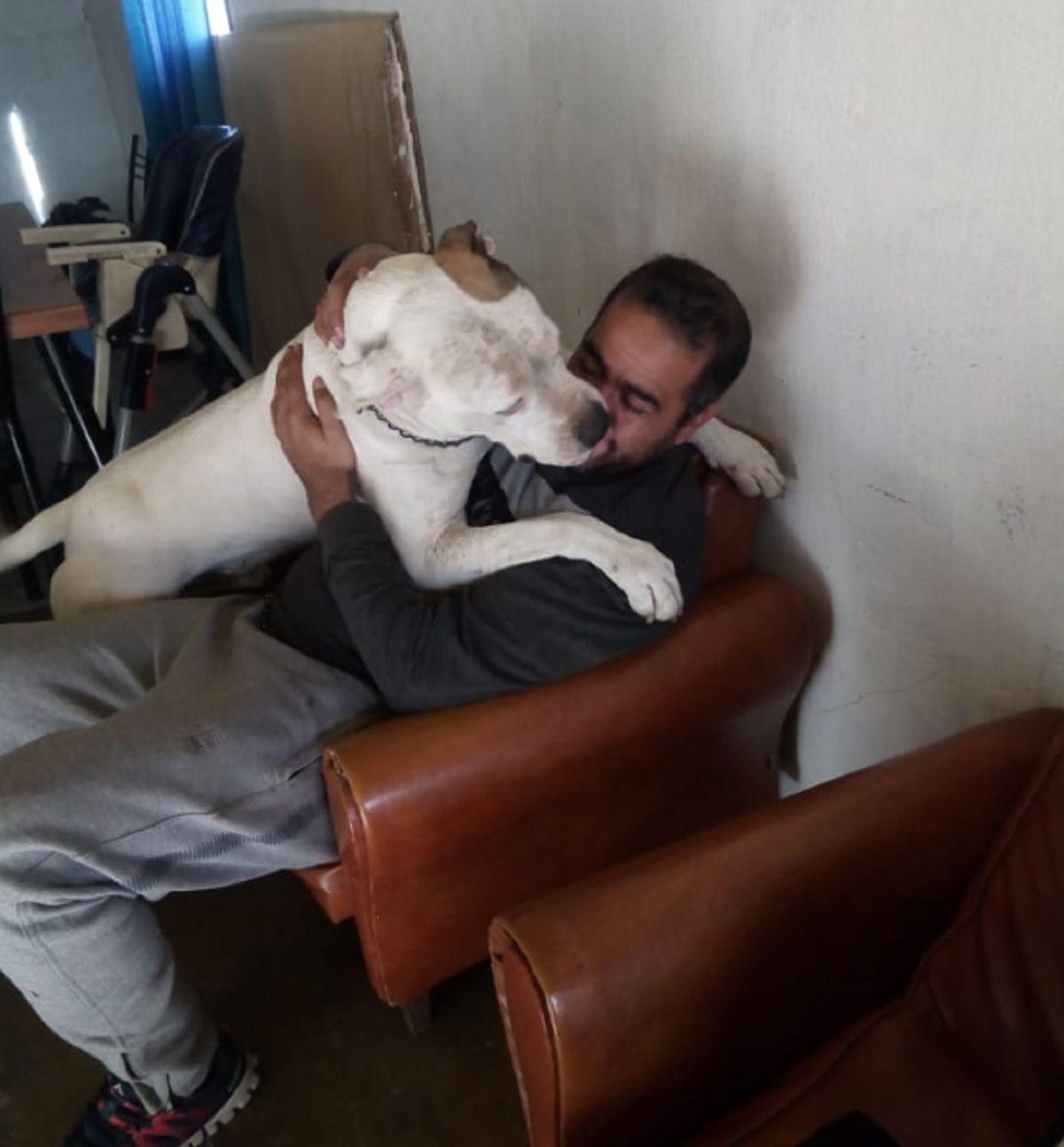 Un perro atacó a cuatro personas en Córdoba: lo mataron a palazos y cuchillazos