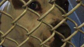 Es una perra increíble: la abandonó con una carta porque no podía mantenerla