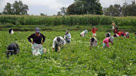 Un informe desmiente a Macri: casi la mitad de los empleos en el campo son precarizados