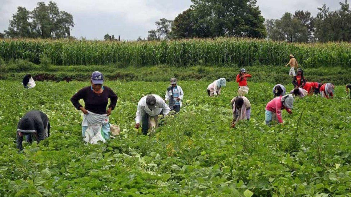 Un informe desmiente a Macri: casi la mitad de los puestos de trabajo en el campo son precarizados