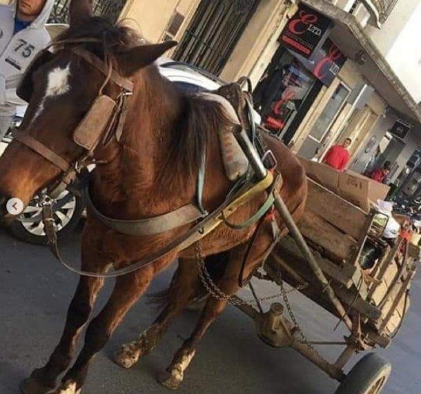 El dictamen permite la tracción a sangre, algo prohibido mediante ordenanzas en diversas ciudades y municipios. Foto: Mi reino por un caballo. Paraná, Entre Ríos.