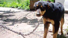 Ahorcó a una perra para corregirla y la mató: apenas lo multaron