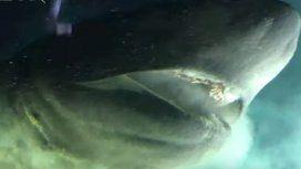 Impresionante: captaron al tiburón más grande y antiguo del Planeta