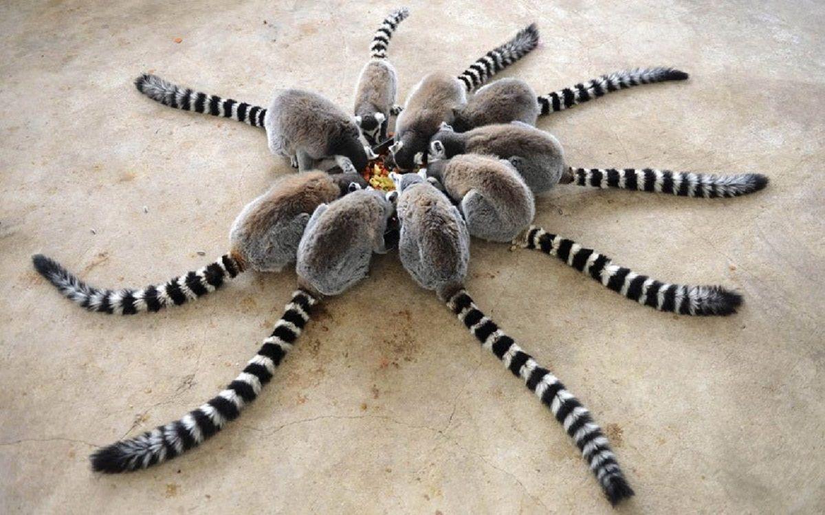 Pensé que era una araña: el tuit viral que llegó a cientos de miles de personas