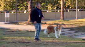 Él no sabe de elecciones: Alberto sacó a pasear a Dylan antes de votar