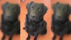 La triste historia del perro al que abandonaron por la crisis: Mi familia ya no me puede mantener