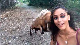 VIDEO: Una cabra embiste a una mujer mientras se sacaba una selfie con ella