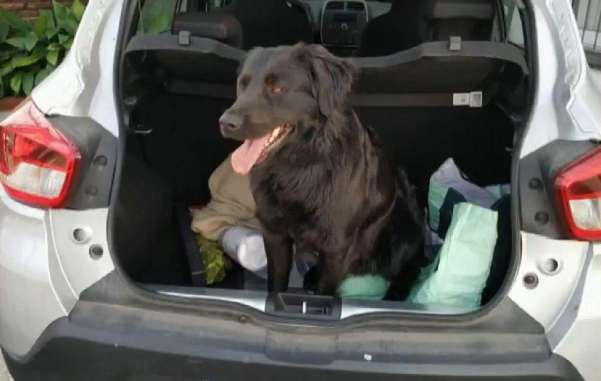 Buscan a un perro que se perdió el jueves en Quilmes