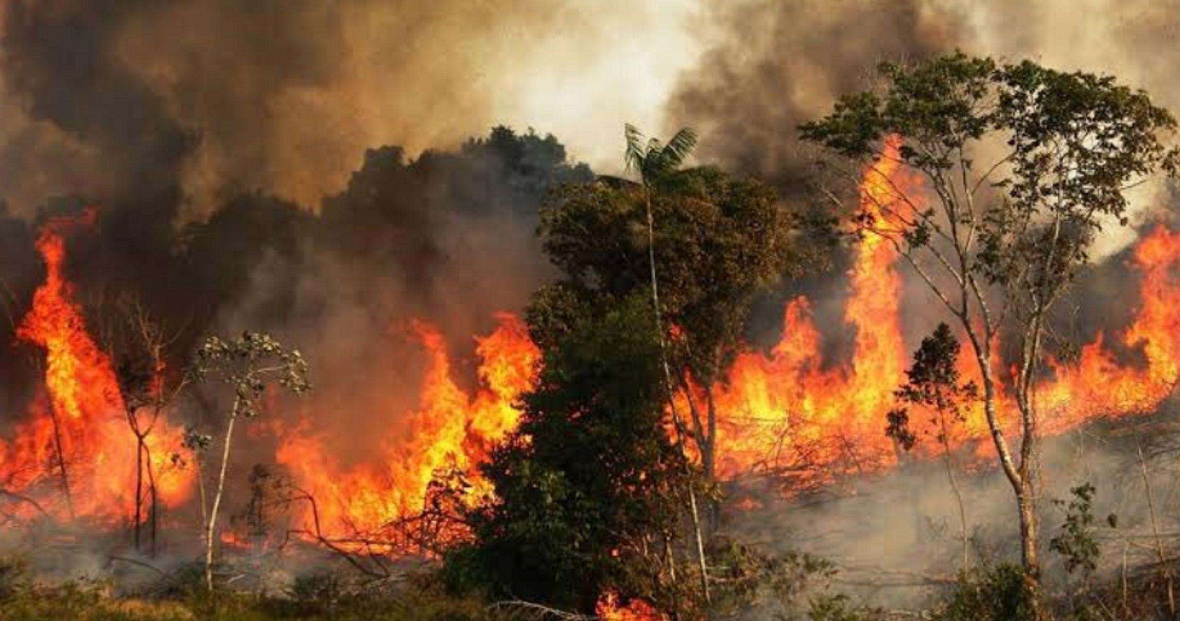 Graves incendios forestales en el Amazonas: las llamas invaden el pulmón del planeta