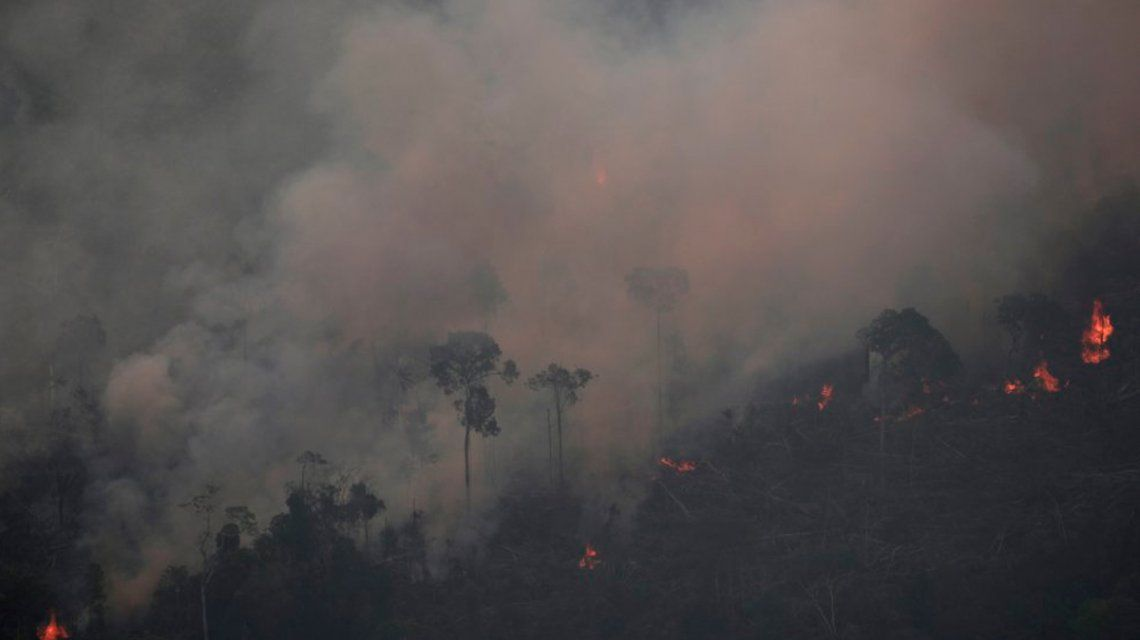 ¿Por qué la madera y carne que comprás también afectan al Amazonas?