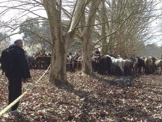 mas de 400 caballos fueron rescatados desnutridos de un campo de ezeiza: 25 habian muerto
