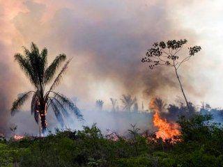incendios en el amazonas: bolsonaro prohibe por dos meses la quema de campos