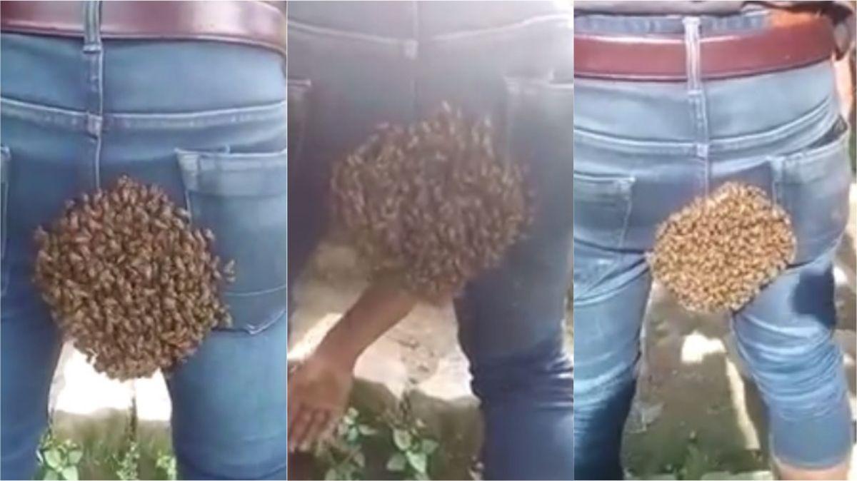 VIDEO: Un enjambre se posó en la cola de un hombre