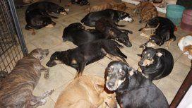 Una mujer hospeda en su casa a 97 perros callejeros para salvarlos del huracán Dorian