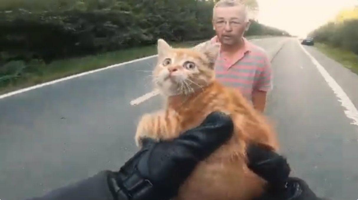 Dos hombres pararon el tránsito para rescatar a un gatito en el medio de la ruta
