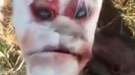VIDEO: El misterioso caso del ternero con cara humana