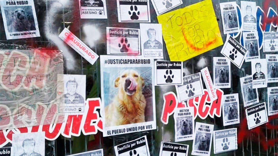 Con el caso del perro Rubio como bandera, marcharon al Congreso contra el maltrato animal