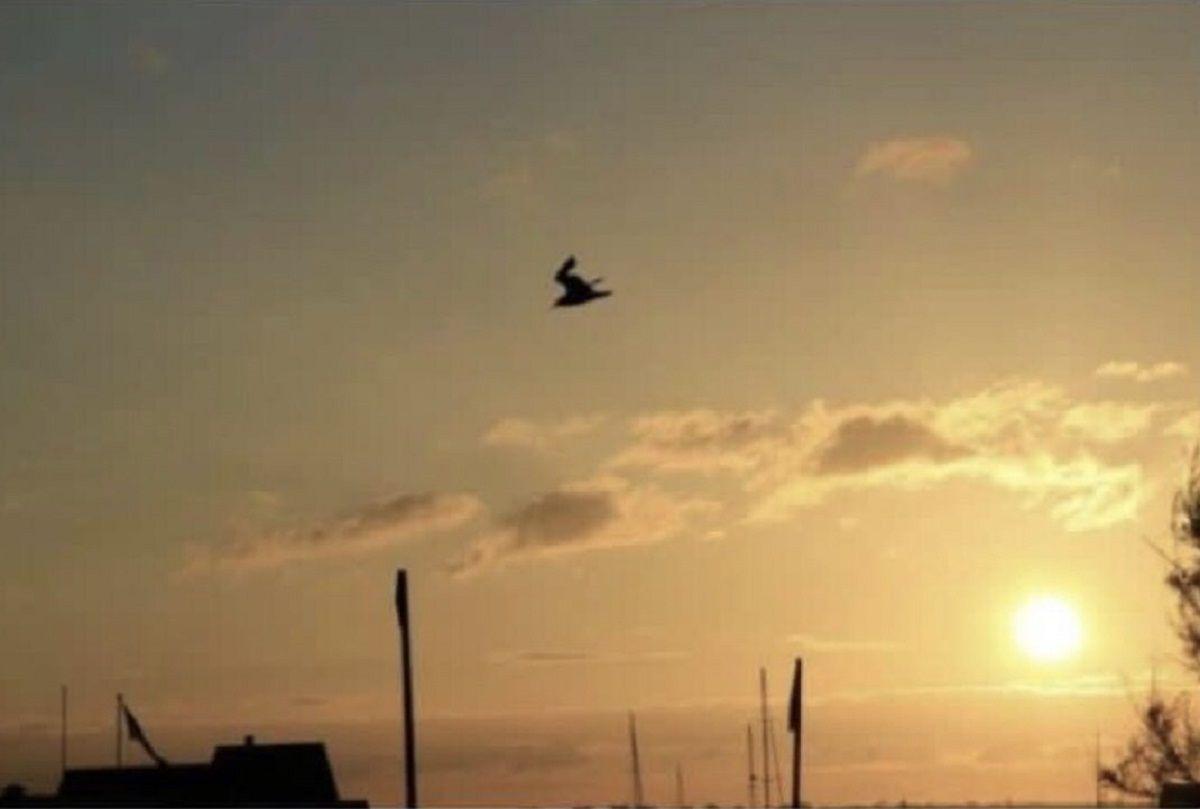 ¿Una paloma o un conejo esquiando?, el viral del día