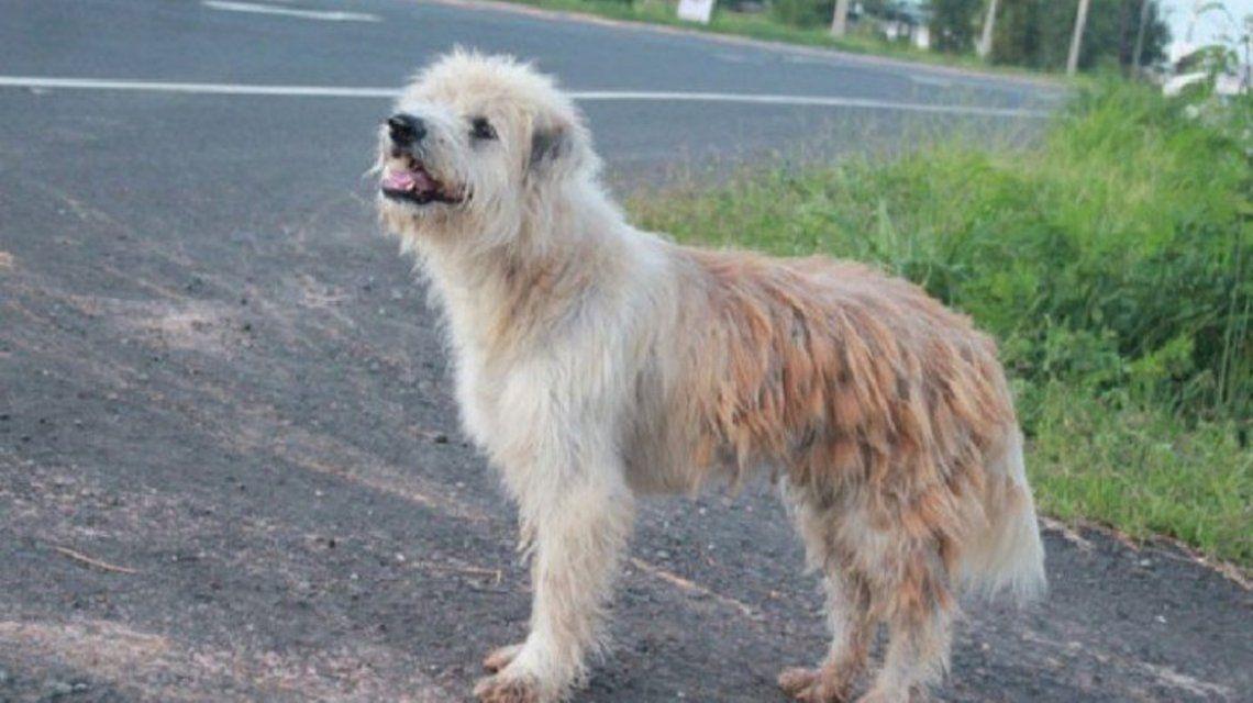 El perro se perdió hace cuatro años