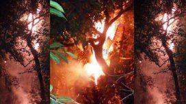 Quiso hacerse un mate y quemó el árbol más antiguo de Misiones