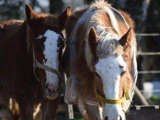 campo del horror: piden donaciones y voluntarios para la recuperacion de caballos