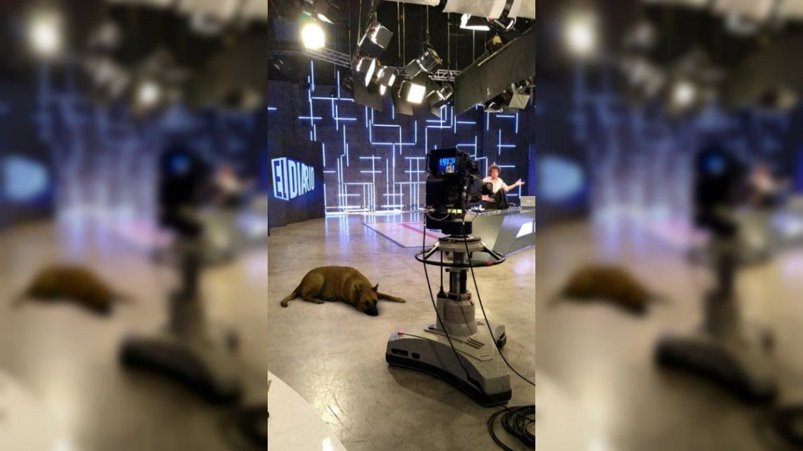 ¿Cómo llegó ese perro ahí?: Sasha Dog, el filtro de Instagram que se volvió viral
