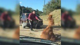 VIDEO: Arrastró a su caballo con el auto hasta dejarlo abatido y quedó detenido