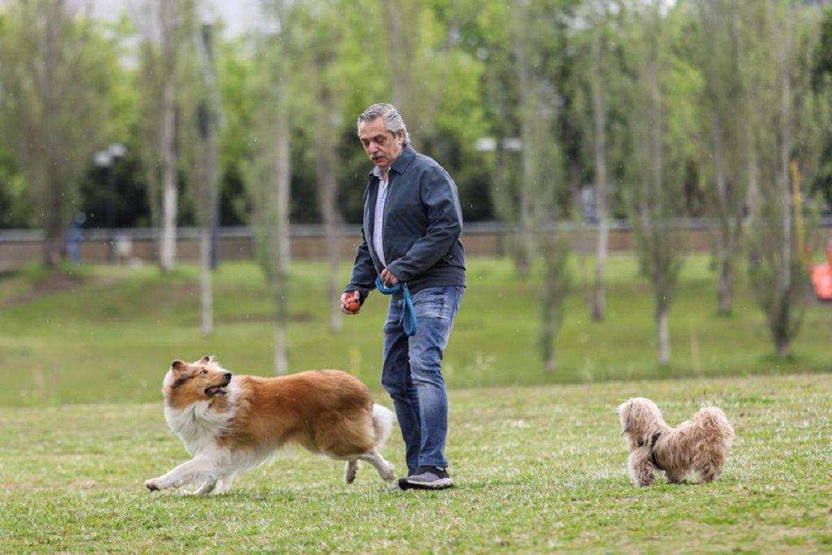 Antes de ir a votar, Alberto Fernández sacó a pasear a su perro Dylan