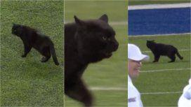 Un gato negro interrumpió un partido de la NFL: ¿a qué equipo le trajo mala suerte?