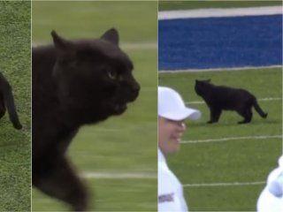 un gato negro interrumpio un partido de la nfl: ¿a que equipo le trajo mala suerte?