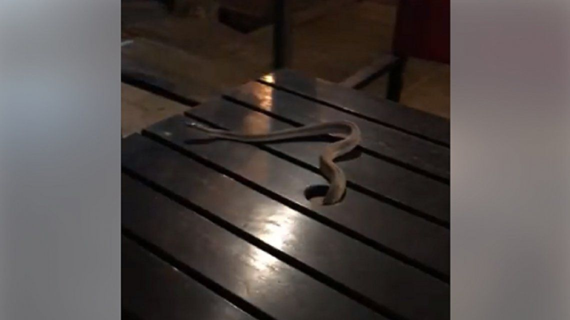 Susto en San Juan: tomaban un café y les cayó una víbora en la mesa