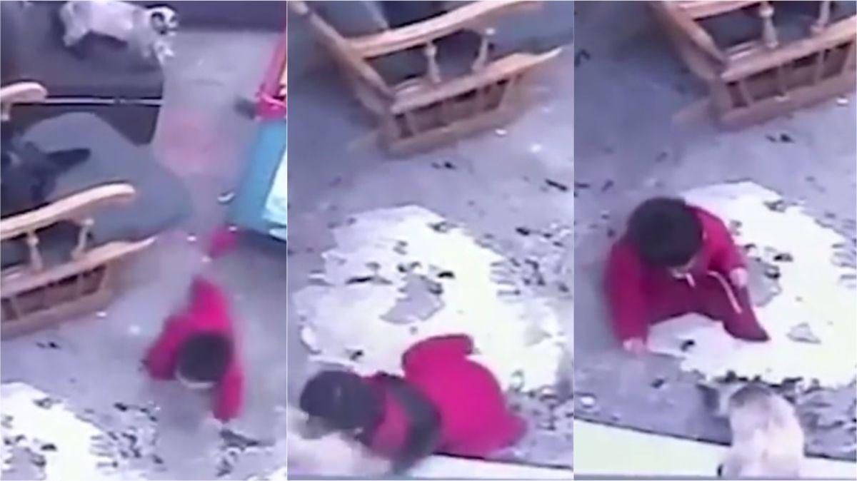 VIDEO: El gato de la familia salvó a un bebé de caerse por las escaleras