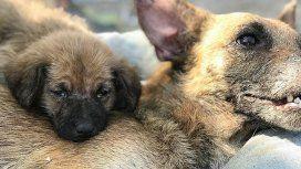 La conmovedora historia de un cachorro que no se separó de su madre mientras ella agonizaba