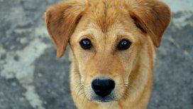 Murió por una infección que contrajo por un beso del perro