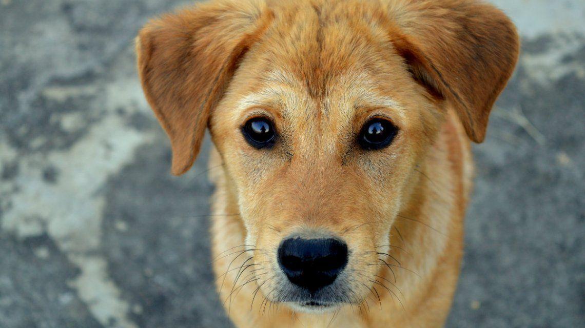 Un hombre murió por una infección que contrajo por un beso de su perro