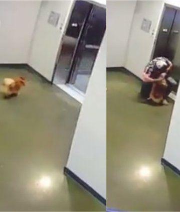 VIDEO: Salvó a un perro de morir estrangulado con su propia correa