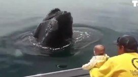 El tierno video de una bebé jugando con una ballena en Chubut