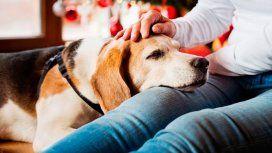 ¿Cómo cuidar a tus mascotas de la pirotecnia durante Nochebuena?