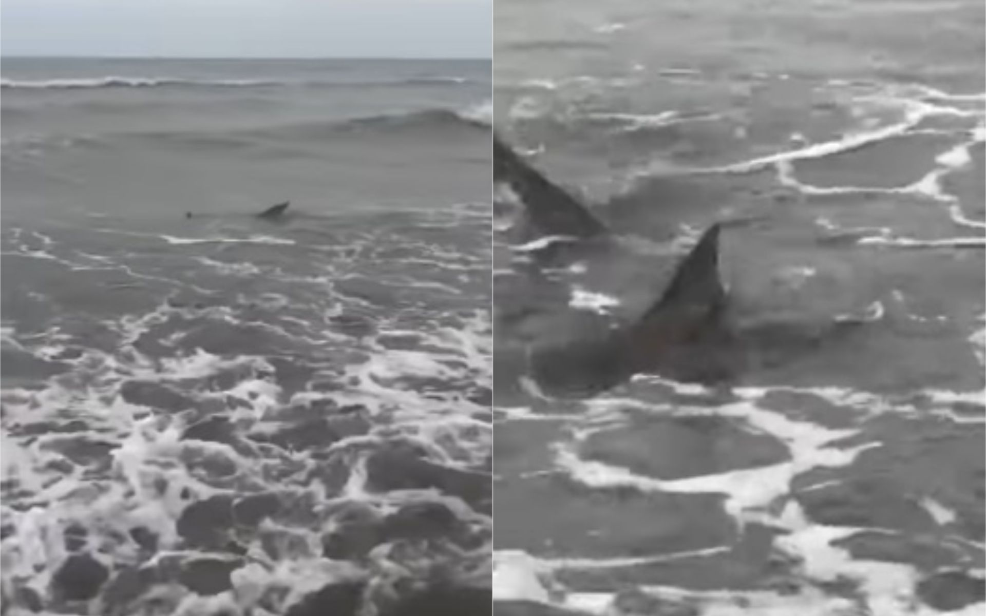 VIDEO: Susto en Monte Hermoso por la aparición de tres tiburones en el mar