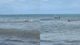 VIDEO: Después de los tiburones