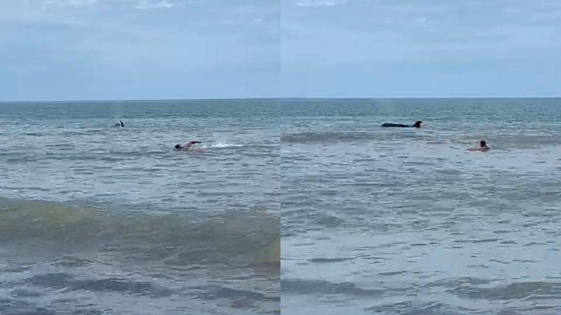 VIDEO: Después de los tiburones, apareció una orca en Monte Hermoso