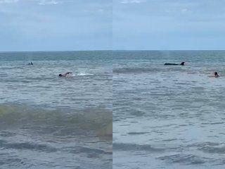 video: despues de los tiburones, aparecio una orca en monte hermoso