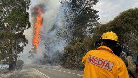 Incendios en Australia: luchan para salvar a los animales atrapados por el fuego