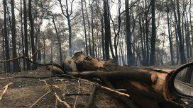 Esperan que las lluvias traigan alivio a los incendios aunque temen por inundaciones