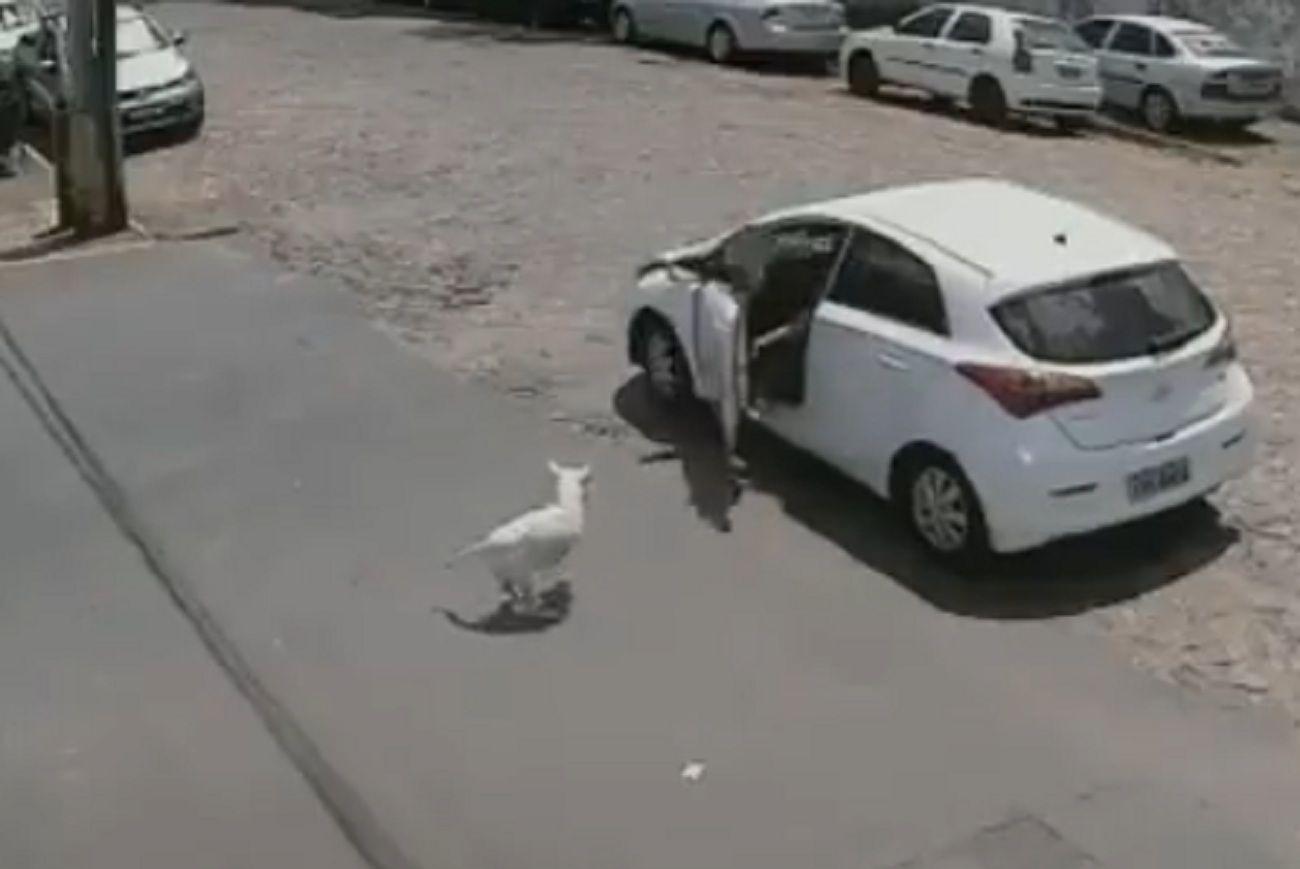 Crueldad: el video de una mujer abandonando y maltratando a un perro discapacitado