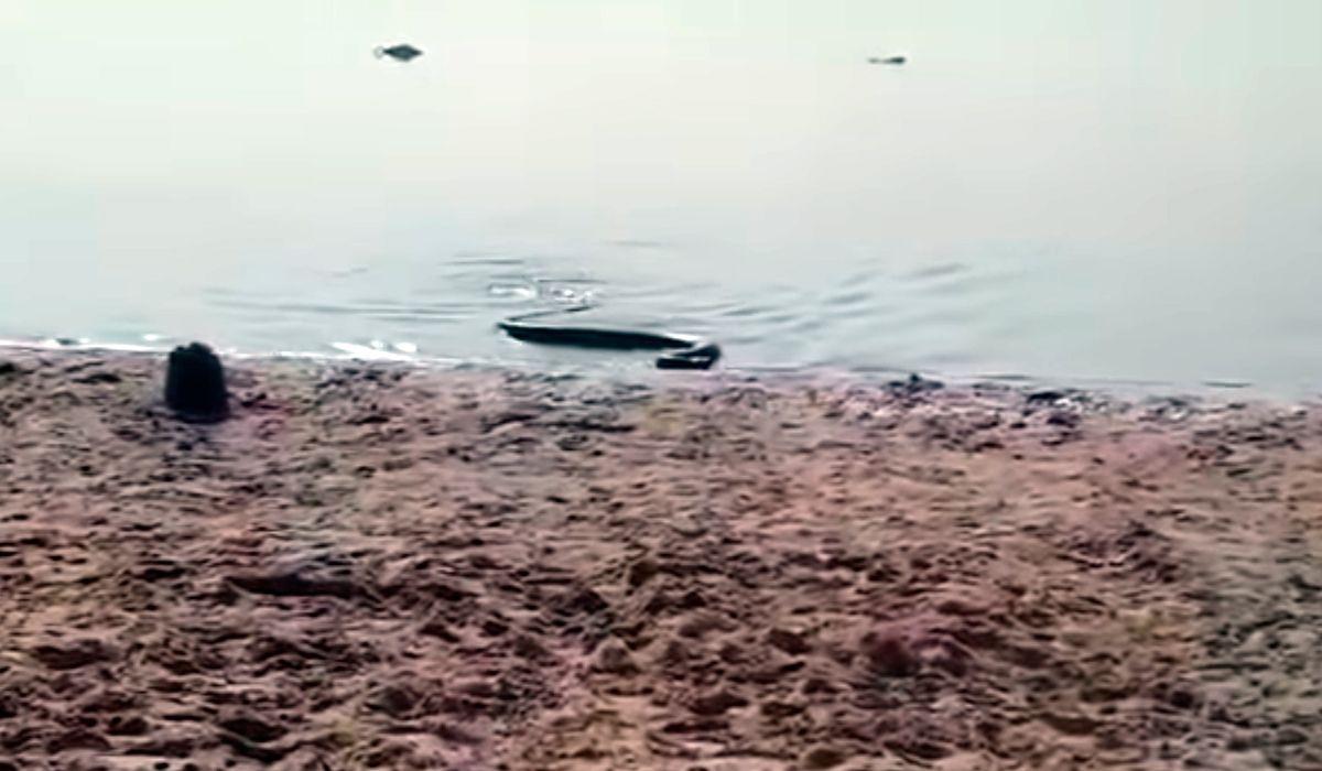 Temor y estupor en Paraná por la aparición de una anaconda amarilla en la playa