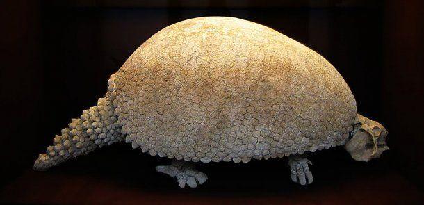 El gliptodonte gigante se extinguió hace más de 10 mil años