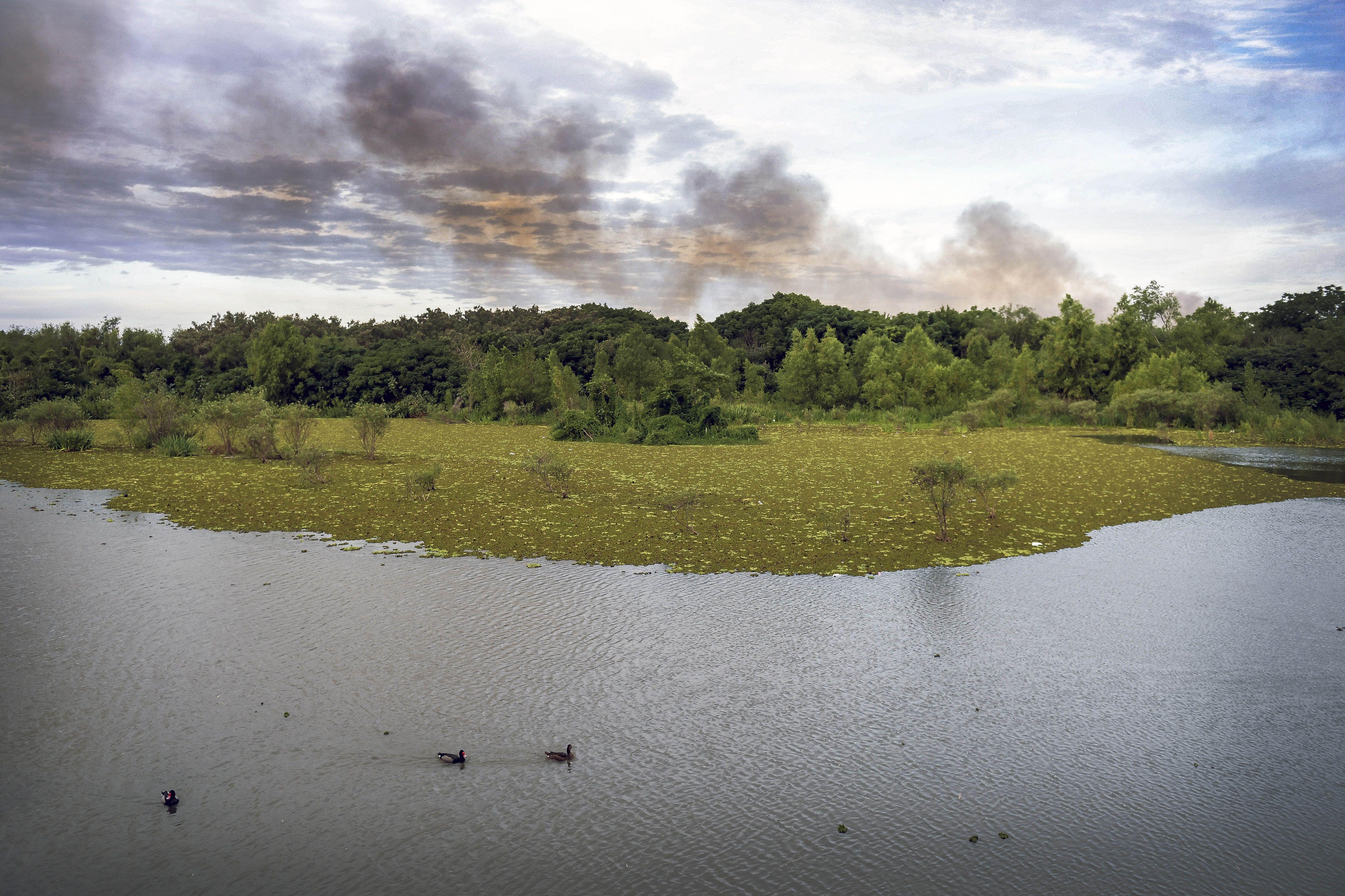 Incendio en la Reserva Ecológica de Costanera Sur: investigan si fue intencional
