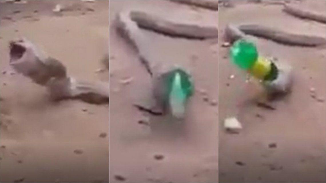 VIDEO: Una cobra vomitó una botella de plástico entera